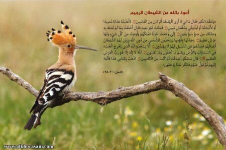 موقف القرآن من خبر الواحد بدون قرينة قطعيّة (النمل/ 20-28)
