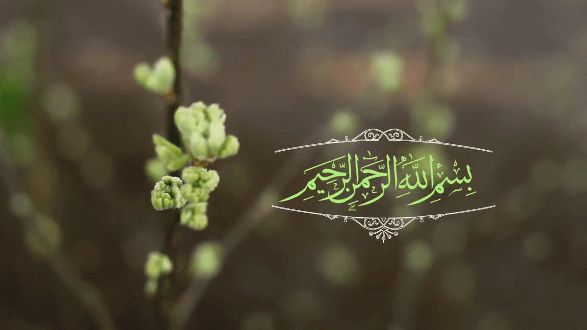 نهضت بازگشت به اسلام (4)