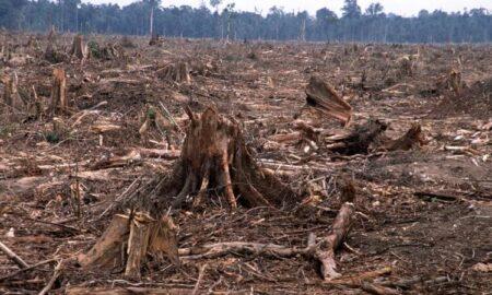 ویرانی زمین